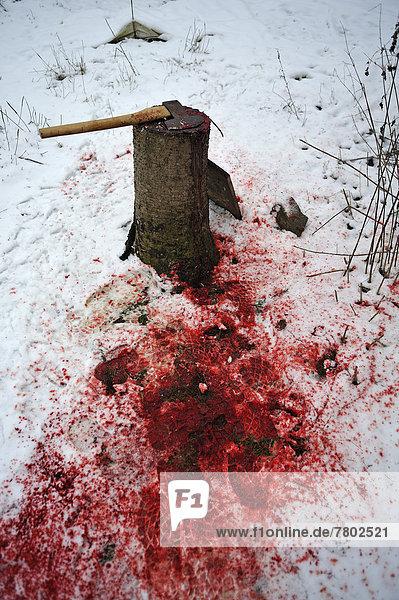 Hausschlachtung auf einem Bauernhof  Entenschlachtplatz im Schnee mit Hackstock und Beil