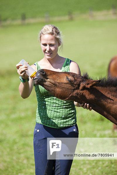 Junge Frau füttert Fohlen Milch mit der Flasche