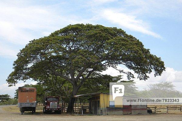 Baum  Leon