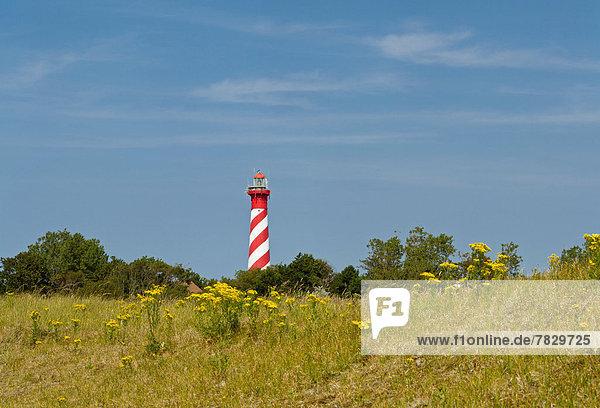 Europa  Blume  Sommer  Landschaft  Leuchtturm  Niederlande
