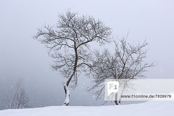 Tree  trees  snowfall  snow  Switzerland  Europe  Schwyz  water  winter  Swiss  snow-covered  snowy  two