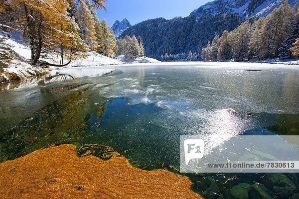 Europa Baum See Eis Kanton Graubünden Lärche Bergsee Schnee Schweiz