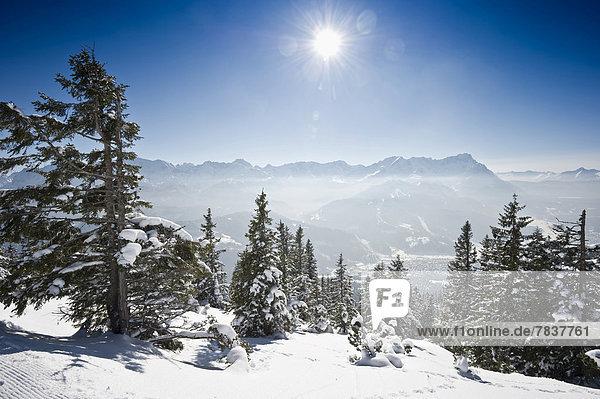 Winterlandschaft mit verschneiten Tannen und Sonne