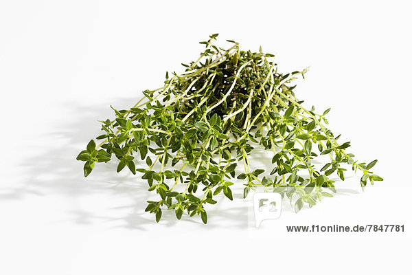 Thyme on white background  close up