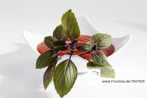 Basil herb with plate of tomato soup on white background  close up