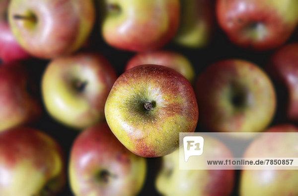 Deutschland  Äpfel  Nahaufnahme