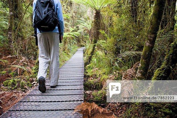 Weg  Wald  Tourist  See  Pazifischer Ozean  Pazifik  Stiller Ozean  Großer Ozean  umgeben  neuseeländische Südinsel  UNESCO-Welterbe  Neuseeland