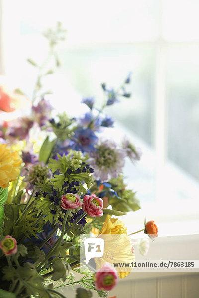 Fenster  Blume  Anordnung  frontal
