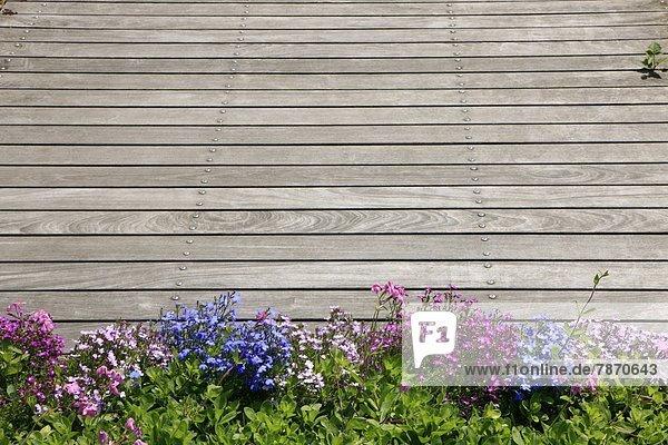 Blume Holzterrasse