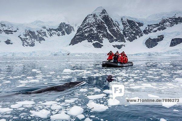 Inspektion  Neugier  Antarktis  Sternzeichen  Bucht  Paradies  Wal
