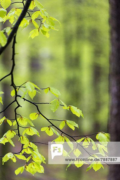 Schluchtensteig und Wehraschlucht  Schwarzwald  Baden-Württemberg  Deutschland  Europa Schluchtensteig und Wehraschlucht, Schwarzwald, Baden-Württemberg, Deutschland, Europa