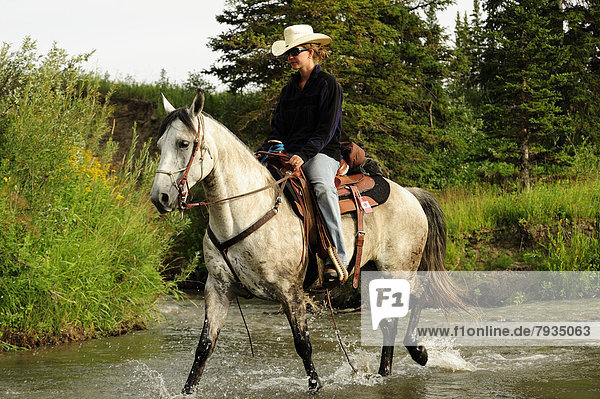 Cowgirl reitet auf einem Schimmel durch einen Fluss