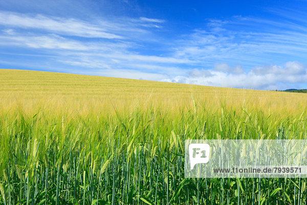 Wolke  Himmel  Feld  Gerste  Hokkaido