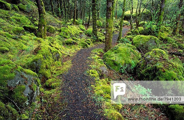 Trail through moss covered forest along the Columbia River  Fort Cascade National Historic Site  Washington USA.