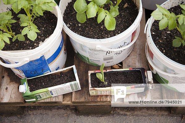 Europa Frankfurt am Main Deutschland Hessen Urban Gardening Urbaner Gartenbau