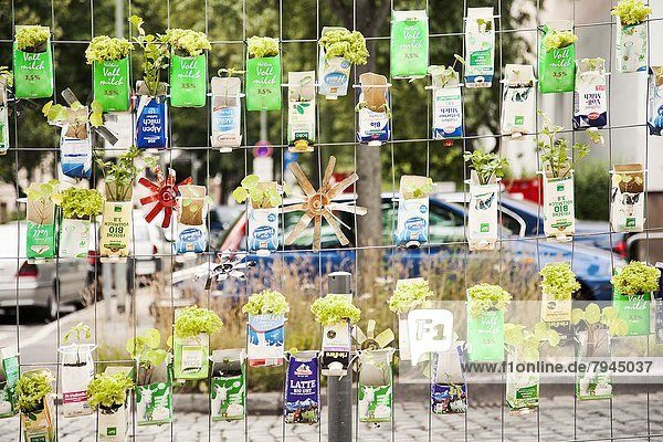 Urban Gardening  Frankfurt am Main  Hessen  Deutschland  Europa