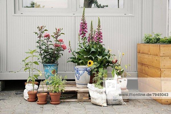 Europa, Frankfurt am Main, Deutschland, Hessen, Urban Gardening, Urbaner Gartenbau