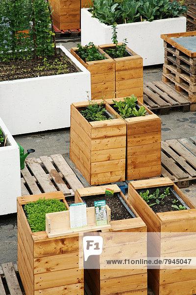 Urban Gardening,  Frankfurt am Main,  Hessen,  Deutschland,  Europa