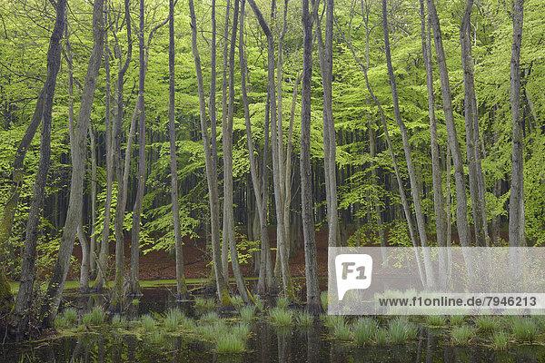 Trees in a swamp  bog