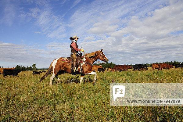 Cowgirl treibt Rinder durch die Prärie