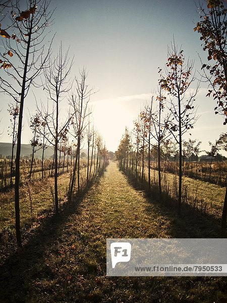 Morgen  Baum  über  aufwärts  Bauernhof  Hof  Höfe  Reihe  England  neu  Sonne