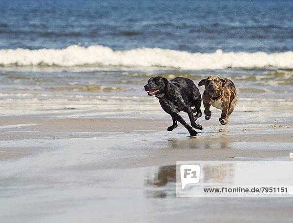 Strand  Hund  nachlaufen  2