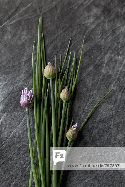 Blühender Schnittlauch und Petersilie auf Textil  Nahaufnahme