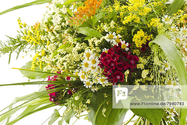 Blumenstrauß aus Feldblumen auf weißem Grund