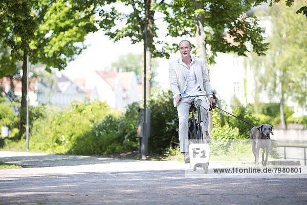 Erwachsener Mann auf dem Fahrrad mit Weimaraner Hund  lächelnd