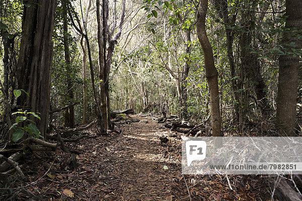 USA  Hawaii  Blick auf den Pfad im Wald