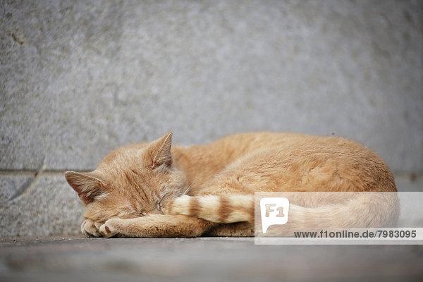 Deutschland  Baden Württemberg  Katze schläft auf dem Boden