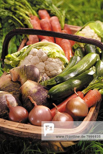 Korb  Gemüse  Vielfalt