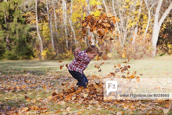 Haufen Junge - Person Herbst jung spielen