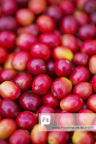 hoch  oben  nahe  Helligkeit  Kirsche  rot  Kaffee  Kona