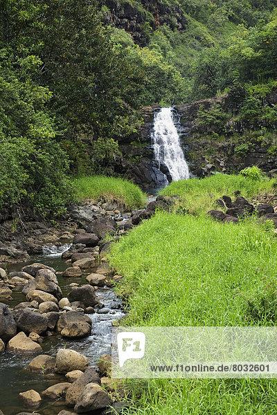 Hawaii  Oahu  Waimea Valley  Waimea Falls and lush foliage.