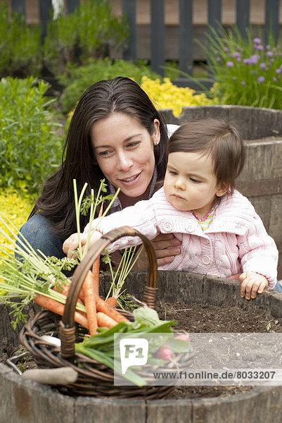 Außenaufnahme  Gemüse  ernten  Garten  Möhre  Mutter - Mensch