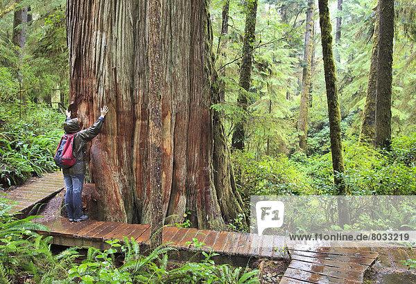 hoch  oben  geben  folgen  Baum  Wachstum  wandern  Pazifischer Ozean  Pazifik  Stiller Ozean  Großer Ozean  Baumstamm  Stamm  Zeder  alt  Regenwald