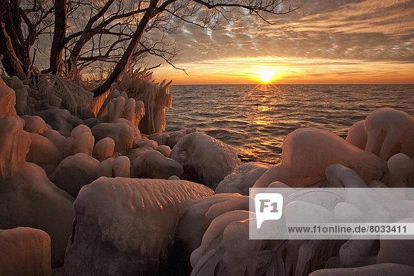 Wasserrand  Felsbrocken  bedecken  Baum  See  Eis  vorwärts  zeigen  Pelee  Ontario