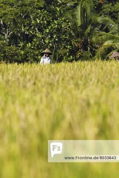 Indonesien  Ubud