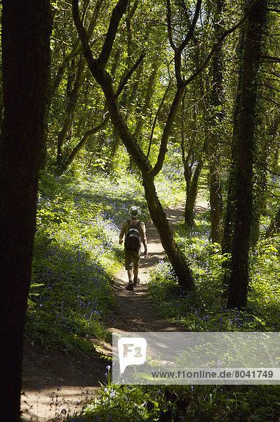 Mann  gehen  Großbritannien  Wald  Rückansicht  Ansicht  Wales