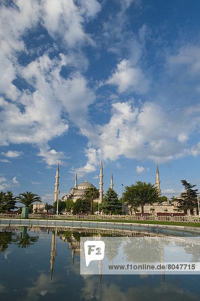 Truthuhn  sehen  blau  Istanbul  Moschee  Teich  Türkei