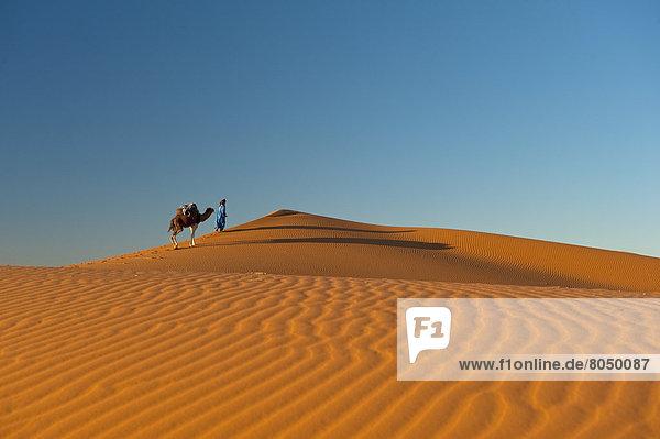 nahe  führen  Mann  Sand  blau  Düne  Berber  Kamel  Abenddämmerung  Merzouga  Marokko