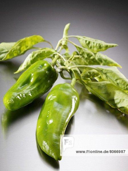 Peperoni Frische grün