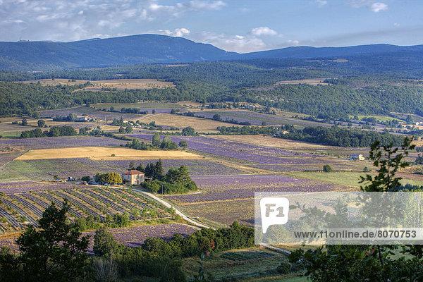Ländliches Motiv ländliche Motive Wohnhaus Feld Einsamkeit Landschaft Provence - Alpes-Cote d Azur Hochebene Lavendel Sault