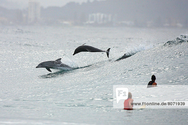 nahe Felsbrocken Wasser Kitesurfer sehen springen 2 Delphin Delphinus delphis Australien Schnapper