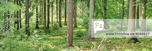 Baumstämme im Wald  Bayern  Deutschland Baumstämme im Wald, Bayern, Deutschland