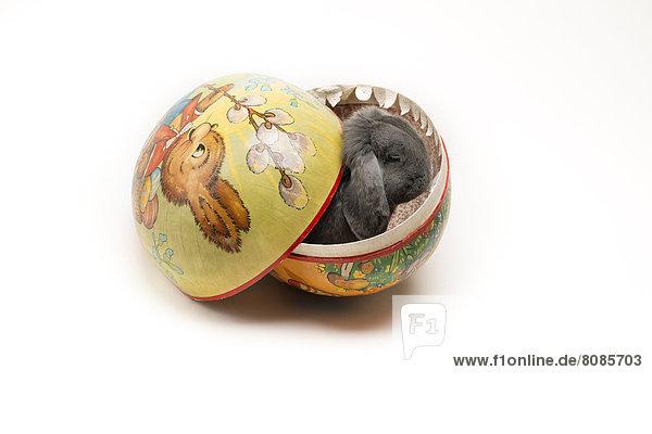 Kaninchen Osterei