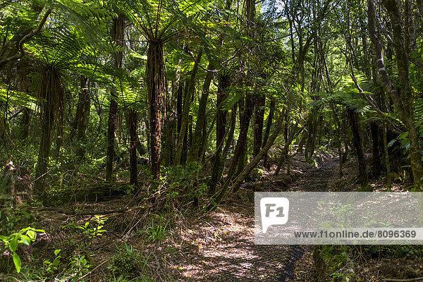 Hiking trail in the jungle