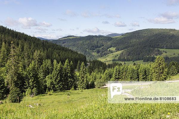 Deutschland  Baden Württemberg  Blick auf den Schwarzwald