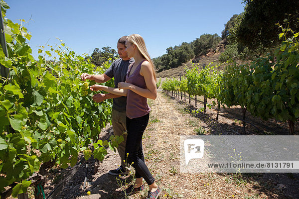 Young couple standing in vineyard